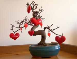 bonsai-coração-quarto-decoração-3