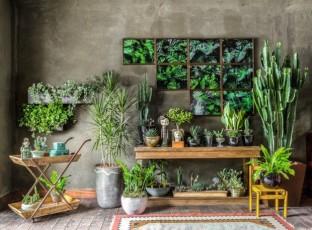 parede-verde-escura-objetos-de-madeira-cactus-e-suculentas-20170511-_t9a5065-edit