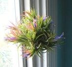 03-maneiras-criativas-de-exibir-plantas-aereas
