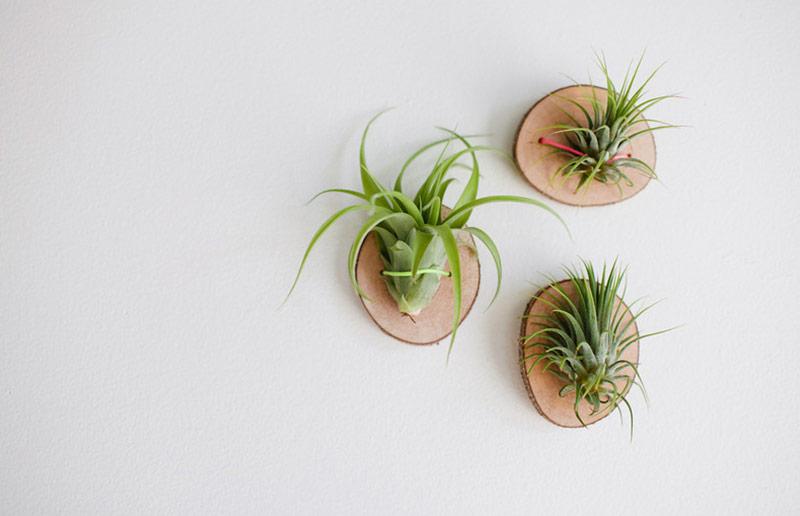 casaecozinha.com_casa_horta_jardinagem_planta_aerea_tutorial2