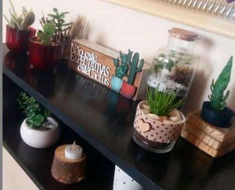 Cactus E Suculentas Lar Doce Lar Da Li